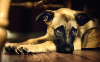 Cute-Dog-Dog-Wallpaper-2.jpg