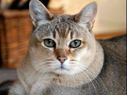 Catpack