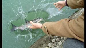 เคล็ดอธิษฐานในการปล่อยปลา ปล่อยเต่า หรือสัตว์น้ำ (หลวงปุ่ขวัญ ปวโร พิจิตร)