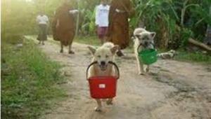 วิธีสังเกตสุนัขที่เลี้ยงไว้ว่าก่อนเกิดมาจากไหน - พระอาจารย์เล็ก วัดท่าขนุน