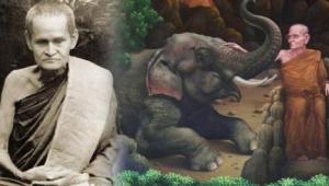 """เมตตาพลานุภาพ!! """"หลวงปู่ขาว"""" เทศน์สยบช้างใหญ่!! ไพเราะจับใจ...ช้างฟังยังเคลิ้ม!!"""