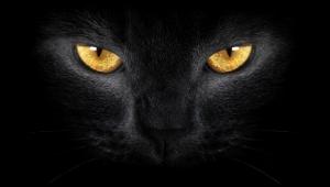 """ตำนานอันลึกลับ """"พระอุ้มหมา แม่ชีอุ้มแมว"""" สิ่งน่าสะพึงกลัวที่มาพร้อมความตาย อย่างไม่คาดคิด!!"""