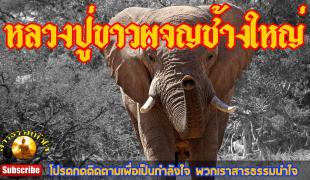 วีดีโอ - ขณะธุดงค์ท่ามกลางป่าใหญ่ หลวงปู่ขาว อนาลโย ก็ได้ผจญช้างป่าตัวใหญ่