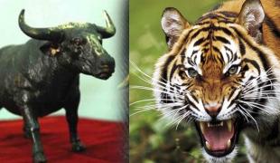 วัวธนู-ควายธนู ปราบเสือสมิง 4 ตัว ของขลังที่ใช้เฝ้าบ้าน เฝ้าเรือน ใครได้ครอบครองได้ผลชะงัดนัก!
