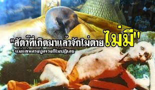 """""""สัตว์ที่เกิดมาแล้วจักไม่ตายไม่มี"""" แม้แต่หลวงปู่สรวงก็ไม่ปฏิเสธ"""