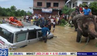 เนปาลใช้ช้าง ช่วยเหยื่อน้ำท่วม