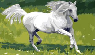 """เรื่อง """"พญาม้ากัณฐกะ"""" (ม้าของเจ้าชายสิทธัตถะ)"""