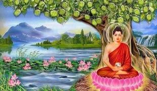 อานิสงส์การบูชาต้นโพธิ์ด้วยดอกไม้3ดอกแล้วไหว้ต้นโพธิ์ดังถวายบังคมพระพุทธเจ้า