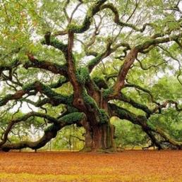 TreeGreeen