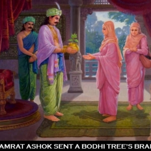 King Asok sent his daughter to plant other Bothi tree