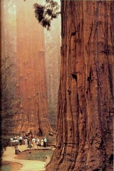 Redwood,California,USA