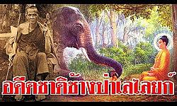 อดีตชาติครูบาศรีวิชัย  เคยเป็นพญาช้างป่าเลไลยก์