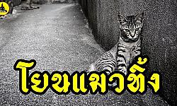 ( เรื่องเล่า อาจารย์ยอด ) : โยนแมวทิ้ง