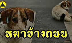 (เรื่องเล่า อาจารย์ยอด) : หมาข้างถนน