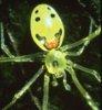 spiderlg.jpg