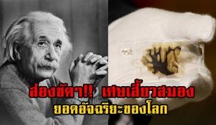 """เสี้ยวสมอง""""อัลเบิร์ต ไอน์สไตน์""""ยอดอัฉริยะของโลก เตรียมจัดแสดงที่พิพิธภัณฑ์ประวัติศาสตร์ เยอรมนี !!"""
