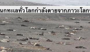 นกทะเลทั่วโลกกำลังล้มตาย!! อีกสัญญาณเตือนภัยพิบัติโลกร้อน