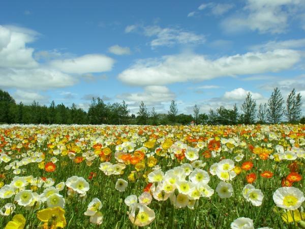 ดอกไม้และท้องฟ้า
