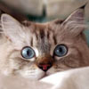 big eyes cat t
