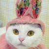 bunny cat t