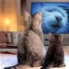 Cats Watching Tv t