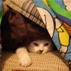 In My Fort t