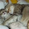 Sleeping Together366 t