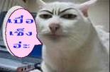 แมวเซ็ง1