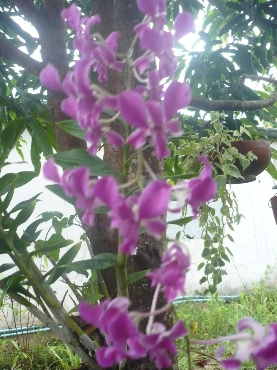 ใต้ต้นมะม่วงหน้าบ้าน