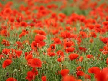 ทุ่งดอกไม้176 360