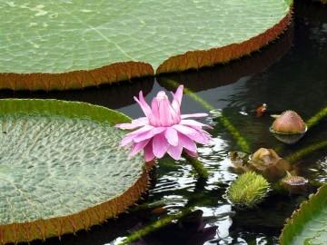 ทุ่งดอกไม้201 360