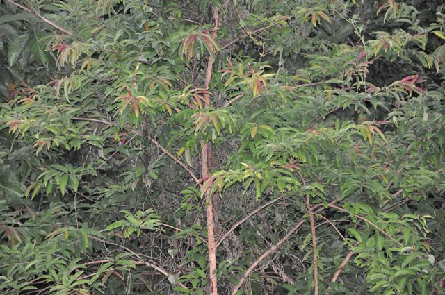 007 วัดป่า 24052552