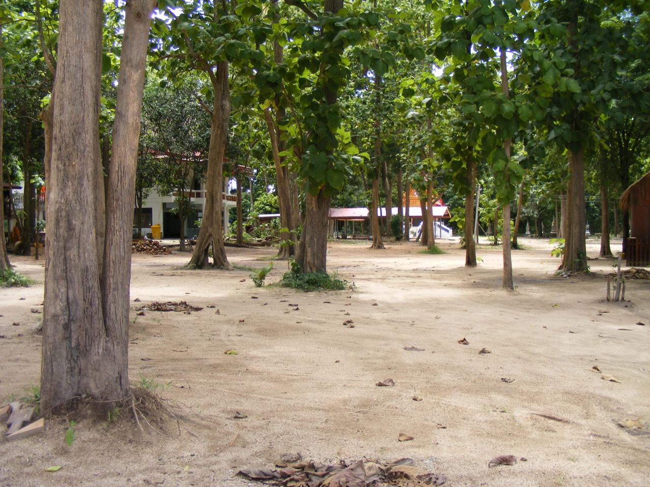 บริเวณวัดปากเหมือง(ป่าสักธรรมชาติ)