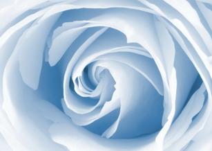 roseblue1