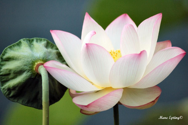 Lotus 3028