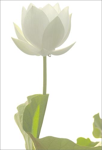 Lotus 3100