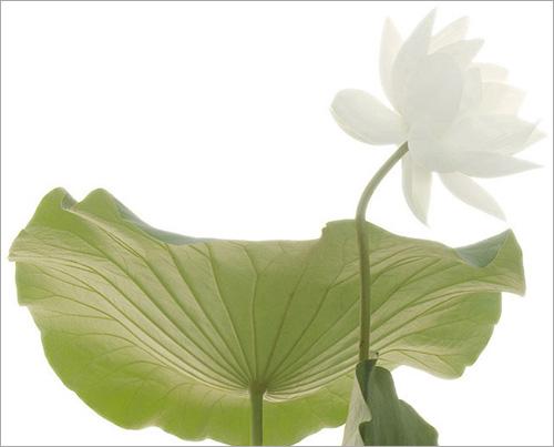 Lotus 3128