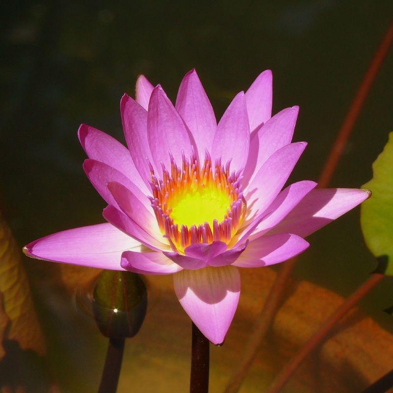 Lotus 3150
