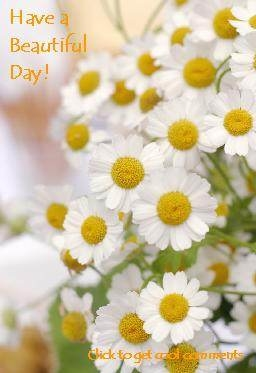 have a beautiful day daisies