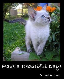 have a beautiful day siamese kitten photo