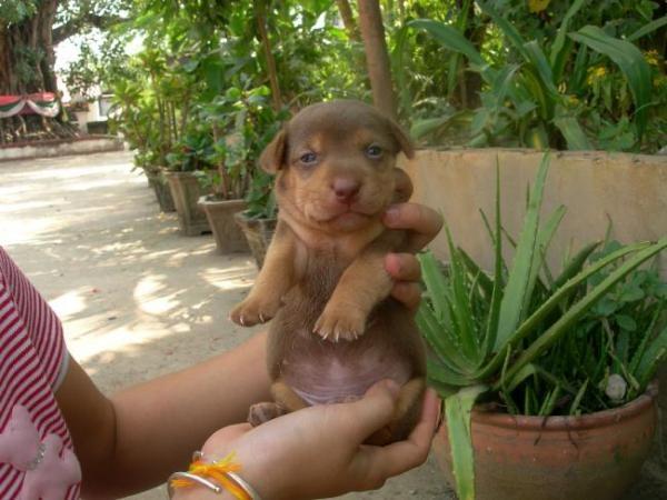 Puppy dog^^