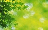 %5Bwallcoo.com%5D 2560x1600 Widescreen GreenLeaves wallpaper da035069fs