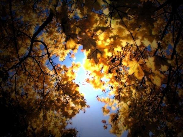 autumn scene 2