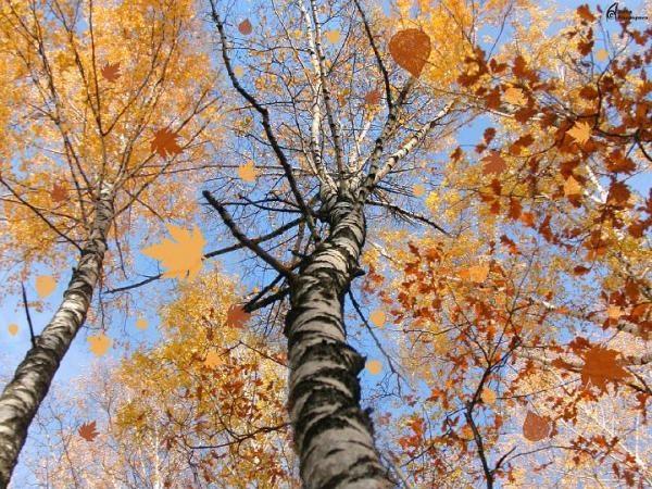autumn scene 14