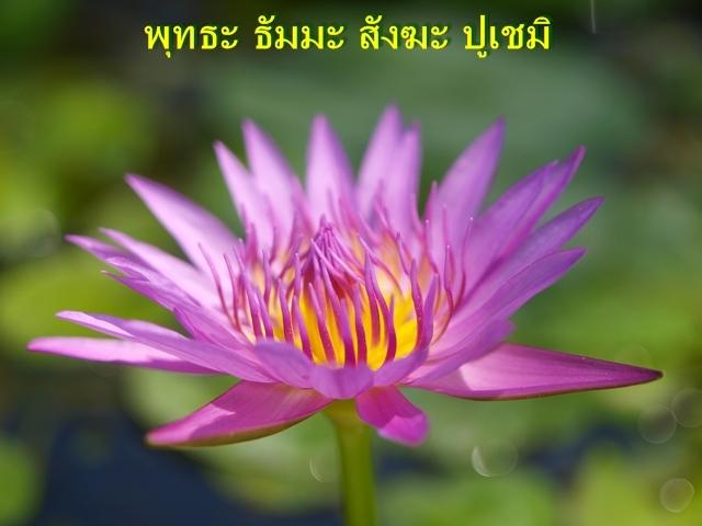 AuThong Trip20100404 083
