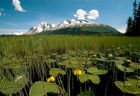 north of seward,Alaska 1997