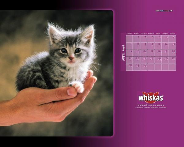 whiskas cat 1