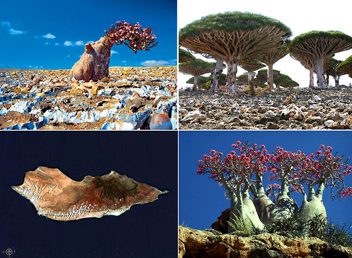 55.most amazing places in the world Socotra Islands