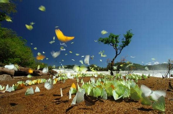 59.national geographic moments 12