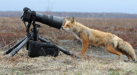 Fox น้อย : รัยเนี่ยอ่ะ.... ^ _ ^